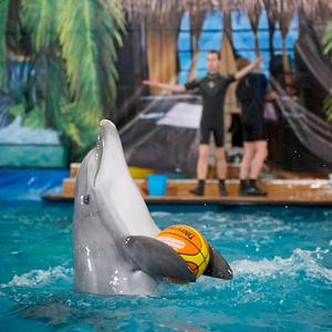 Дельфинарии, океанариумы Санкт-Петербурга