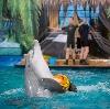 Дельфинарии, океанариумы в Санкт-Петербурге