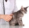 Ветеринарные клиники в Санкт-Петербурге